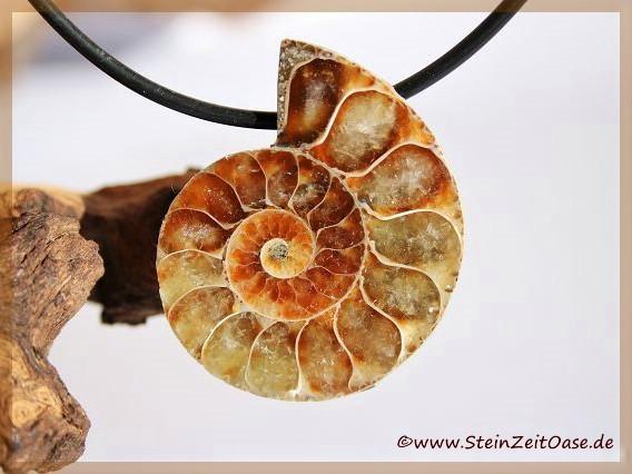 Ammoniten gebohrt Schmucksteine